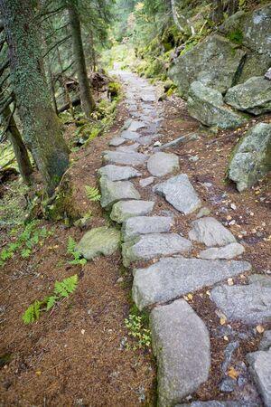 tatras tatry: path in Vysoke Tatry (High Tatras), Slovakia