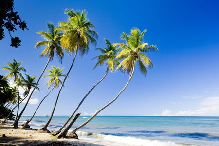 Northern coast of Trinidad; Caribbean photo