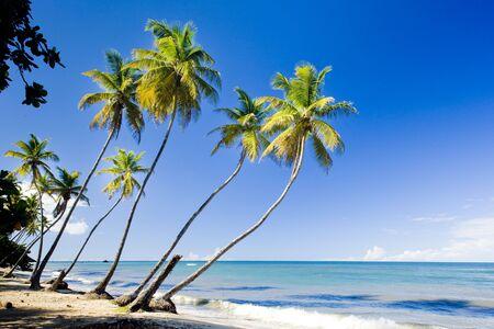 トリニダード北海岸;カリブ海