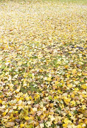 falltime: autumnal leaves Stock Photo