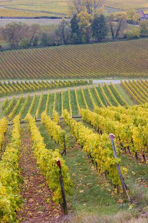 hessen: vineyards near Johannisberg Palace, Hessen, Germany Stock Photo