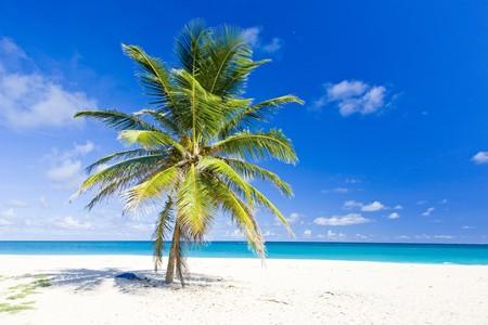 playas tropicales: Bahía de foul, Barbados, Caribe