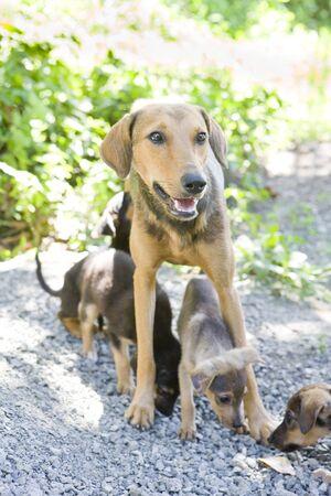 mujer perro: perro femenino con cachorros, Tobago  Foto de archivo