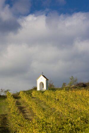 znojemsko: vineyard near Hnanice, Znojmo Region, Czech Republic