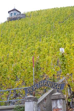 moseltal: vineyard Doctor, Bernkastel, Rheinland Pfalz, Germany