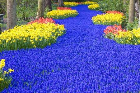 hyacinths: Keukenhof Gardens, Lisse, Netherlands