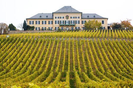 hessen: Johannisberg Castle with vineyard, Hessen, Germany Stock Photo