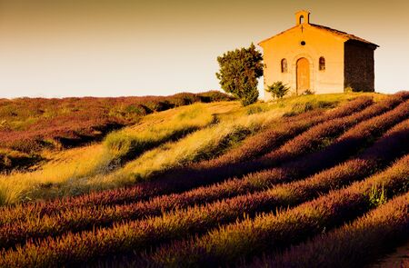 western europe: chapel with lavender field, Plateau de Valensole, Provence, France Stock Photo