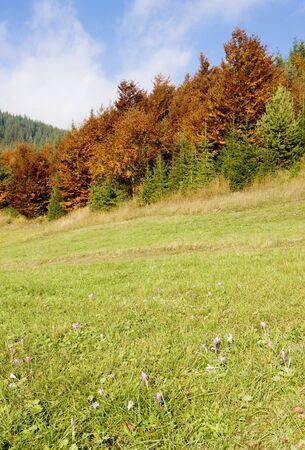 tatras tatry: meadow in blossom, Nizke Tatry (Low Tatras), Slovakia Stock Photo