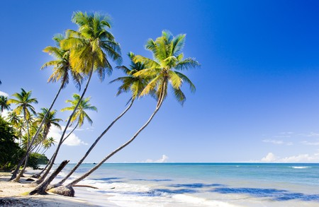Northern coast of Trinidad, Caribbean Stock Photo - 7167010