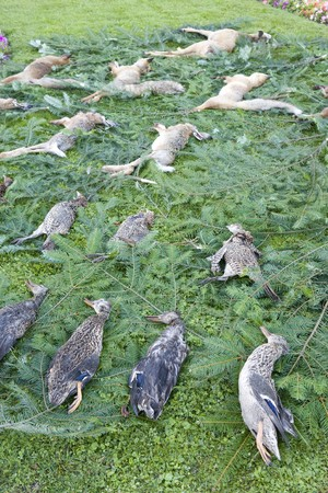 dead duck: dead forest animals
