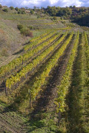 znojemsko: vineyards, Eko Hnizdo, Czech Republic Stock Photo
