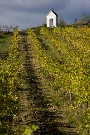 znojmo region: vineyard near Hnanice, Znojmo Region, Czech Republic