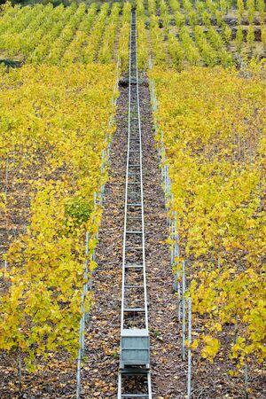 moseltal: vineyards in Moselle River Valley, Rheinland Pfalz, Germany
