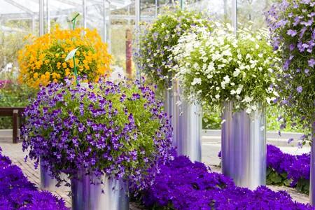 lisse: bloem boeketten, keuken Hof Gardens, Lisse, Nederland  Stockfoto