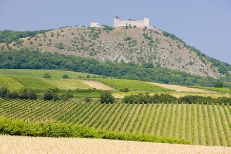 r�publique  tch�que: ruines du ch�teau de Devicky avec des vignobles, R�publique tch�que
