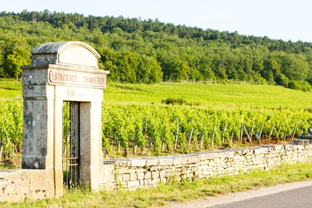 world locations: Latricieres vineyard, Chambertin, Cote de Nuits, Burgundy, France