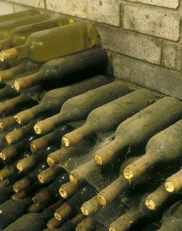 Frantisek Polehna winery, wine cellar, Blatnice pod svatym Antoninkem, Czech Republic Stock Photo - 7386678