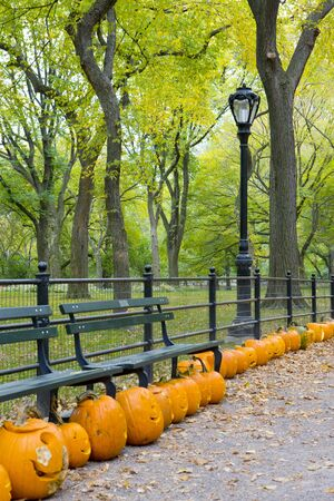 customs and celebrations: autumnal Central Park, New York City, USA