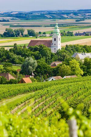 znojmo region: vineyards, Southern Moravia, Czech Republic Stock Photo