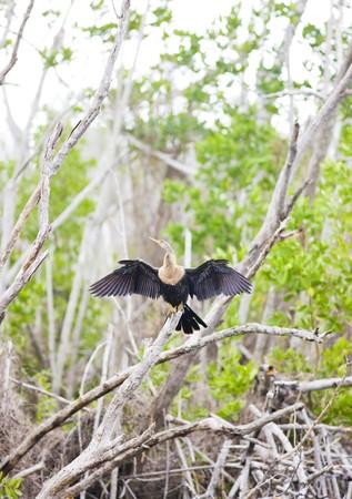 fauna of Everglades National Park, Florida, USA photo