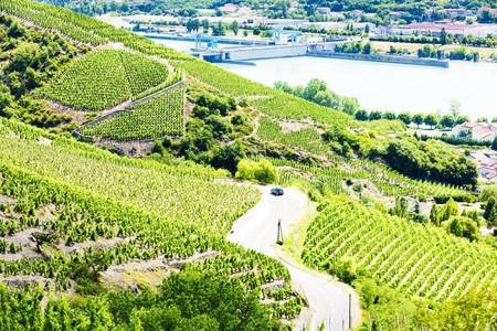 crus: grand cru vineyards near Ampuis, Cote Rotie, Rhone-Alpes, France Stock Photo