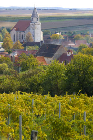 znojemsko: vineyard, Hnanice, Czech Republic