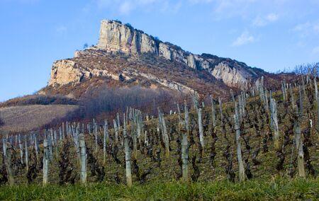 La Roche de Solutré with vineyards, Burgundy, France photo