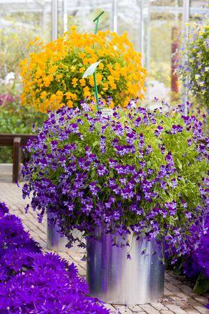 lisse: bloem boeketten, keuken Hof tuinen, Lisse, Nederland