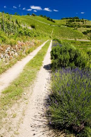 crus: grand cru vineyard,  Hermitage,  Alpes, France