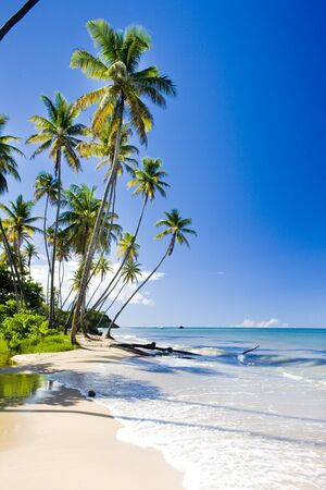 Northern coast of Trinidad, Caribbean photo