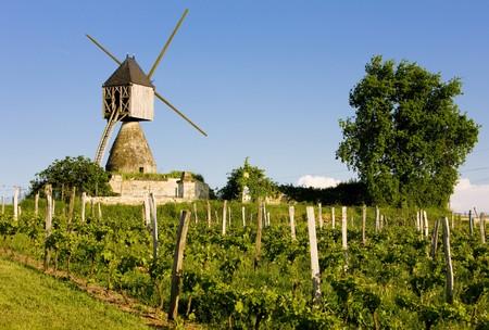 mill valley: windmill and vineyard near Montsoreau, Pays-de-la-Loire, France