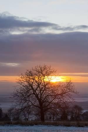 auroral: tree at sunset