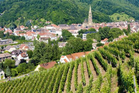 crus: grand cru vineyard, Thann, Alsace, France