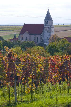 znojmo region: vineyard, Hnanice, Czech Republic