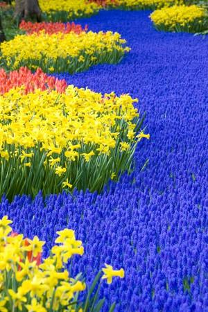 lisse: Keuken hof Gardens, Lisse, Nederland  Stockfoto
