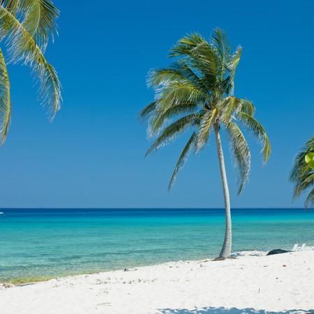 palmtrees: Mar�a la Gorda, Pinar del R�o Province, Cuba