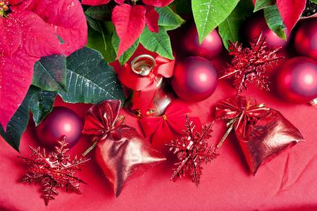 still lifes: Christmas still life with Poinsettia
