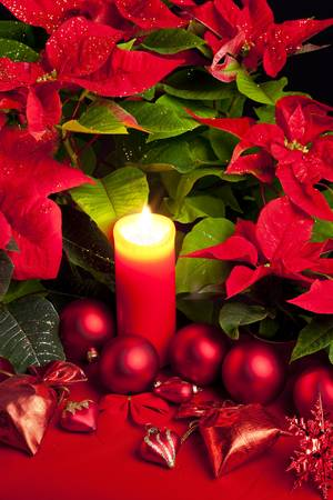 Christmas still life with Poinsettia photo