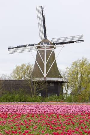 windmill with tulip field, Holwerd, Netherlands Stock Photo - 8134831