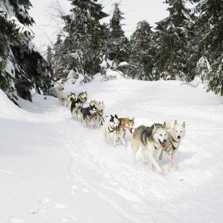 ?    ?     ?    ? �sledge: trineo dogging, Sedivacek s largo, Rep�blica Checa