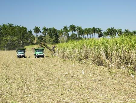 cosechadora: cosecha de ca�a de az�car, provincia de Sancti Sp?ritus, Cuba