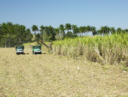 sugar cane harvest, Sancti Spíritus Province, Cuba photo