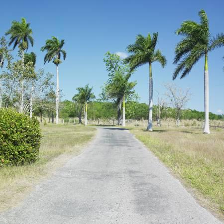 botany garden, Jard�n Bot�nico de Cienfuegos, Cuba photo