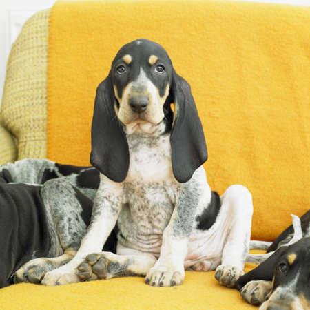 puppy Stock Photo - 8338901