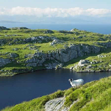 Ovejas ' s península de jefe, Condado de Cork, Irlanda