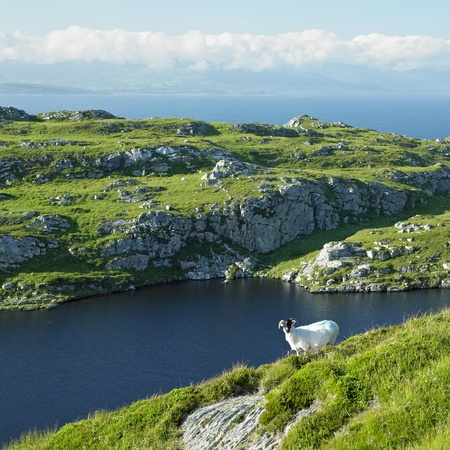 ireland: Sheeps Head Peninsula, County Cork, Ireland