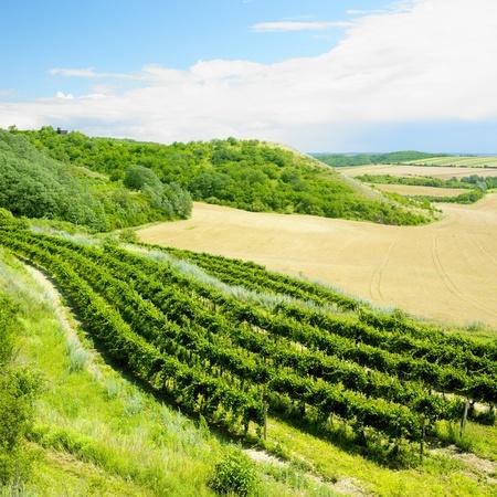 znojmo region: vineyard, Eko Hnizdo, Czech Republic Stock Photo