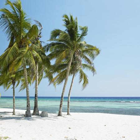 caribbean sea: Playa Gir�n, Caribbean Sea, Cuba