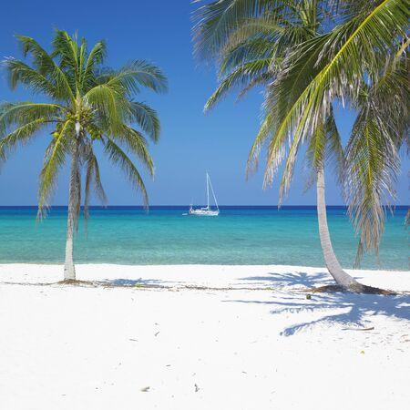 beach palm: Mar�a la Gorda Beach, Pinar del R�o Province, Cuba